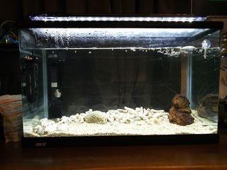 �@海水魚水槽 (2).JPG
