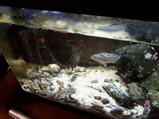 海水魚水槽 (1).jpg